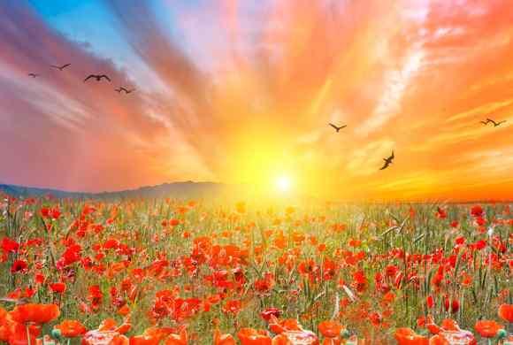 Le bonheur sous nos yeux : des champs de coquelicots inondés de soleil, des oiseaux tournoyant dans le ciel...