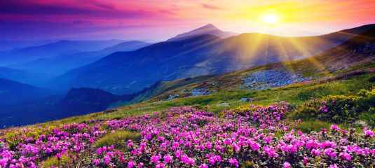 L'égo est telle la brume ; dissipée, on voit enfin le soleil qui éclaire cette belle montagne et toutes ses fleurs mauves printanières ; internement, on voit enfin sa Nature réelle.
